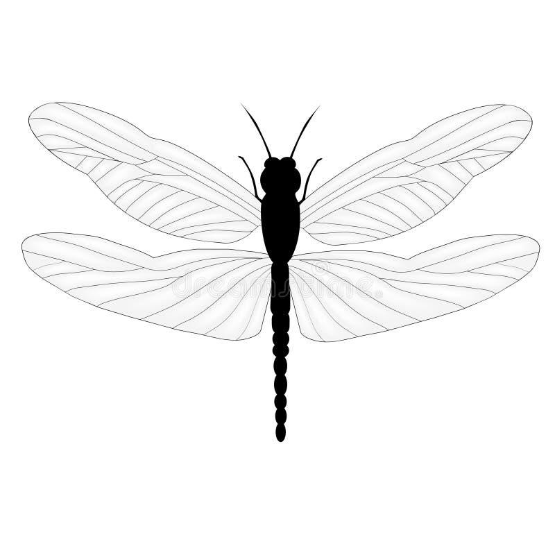 查出的经典蜻蜓 向量例证