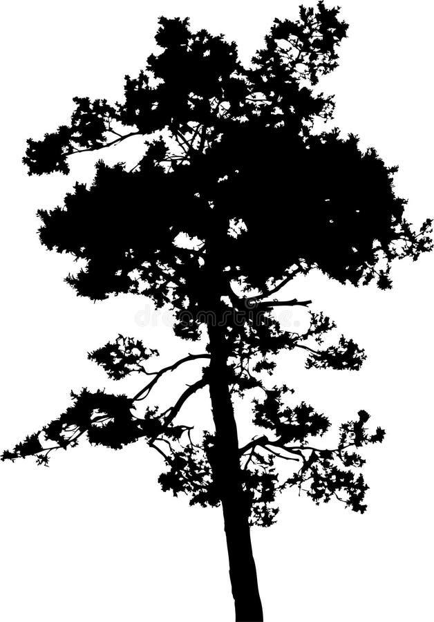查出的结构树- 14。 剪影 免版税库存照片