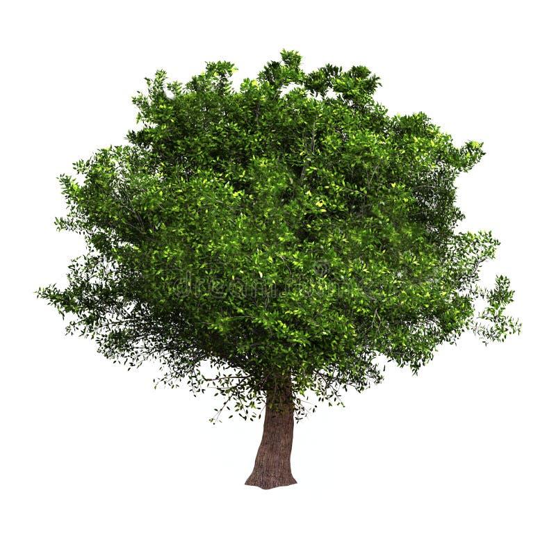 查出的结构树 向量例证