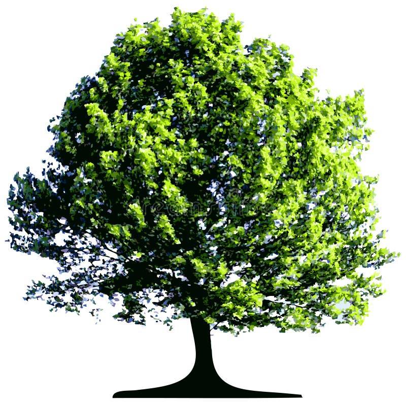 查出的结构树 皇族释放例证