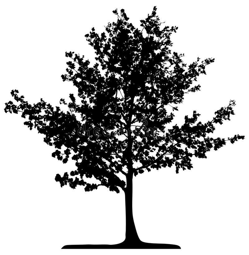 查出的结构树 库存例证
