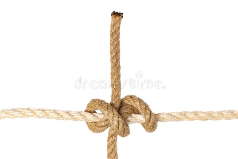 查出的绳索 图辗压栓结或结特写镜头从被隔绝的一条棕色绳索在白色背景 海军和海洋结 免版税库存图片