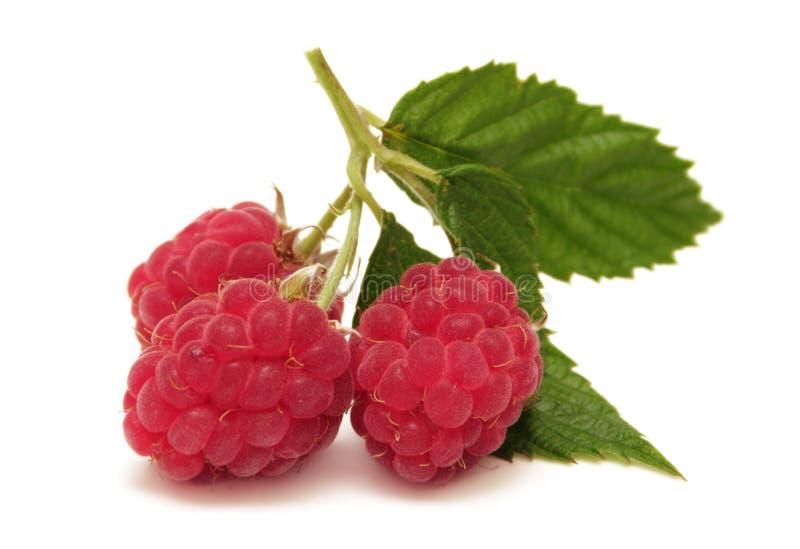 查出的莓 免版税库存照片