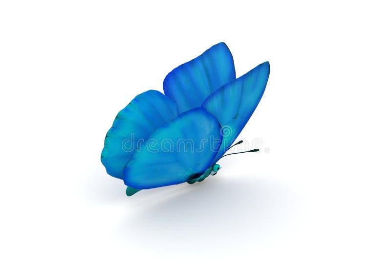 查出的蓝色蝴蝶 向量例证