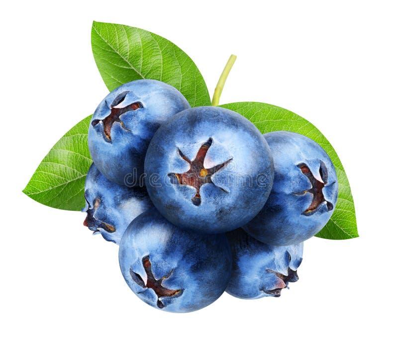 查出的蓝莓 束与在白色背景隔绝的叶子的甜蓝莓果子,裁减路线 免版税库存图片