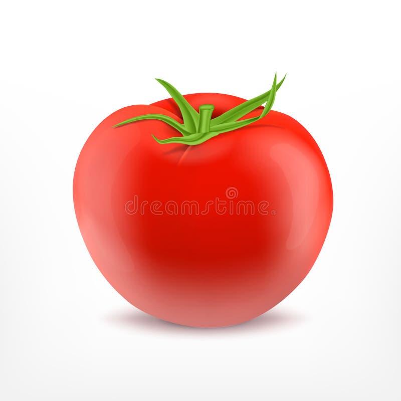 查出的蕃茄白色 向量例证