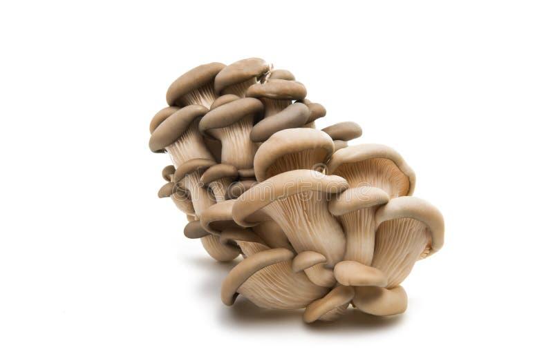 查出的蘑菇牡蛎 库存图片