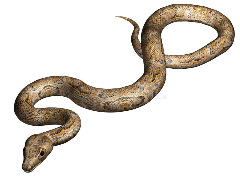 查出的蛇 皇族释放例证