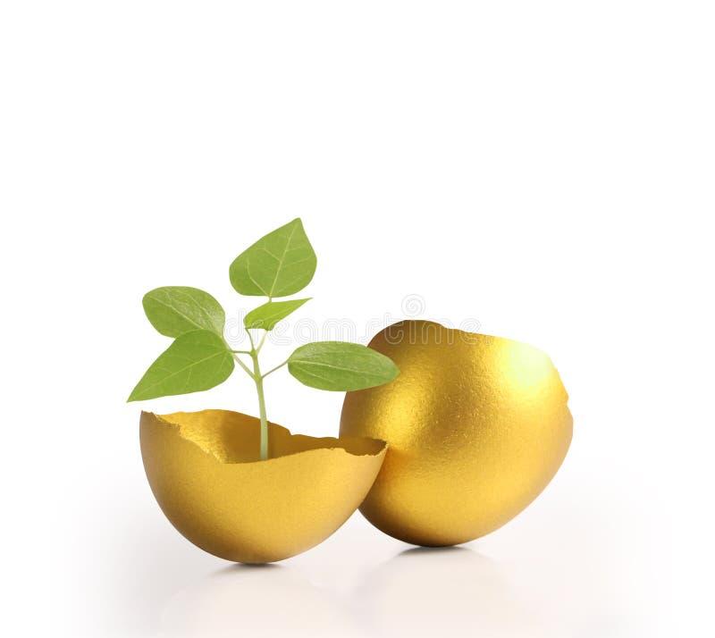 查出的金黄复活节彩蛋 库存图片