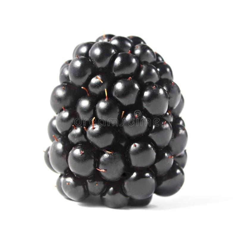 查出的黑莓 库存图片