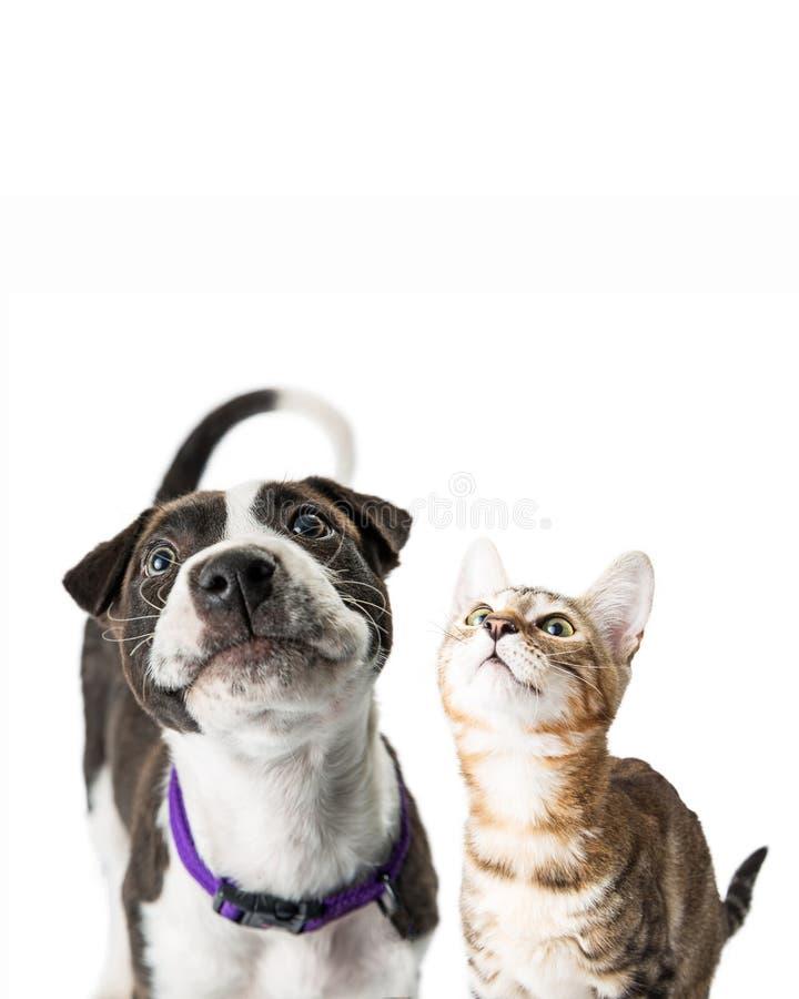查寻特写镜头逗人喜爱的小狗和的小猫 库存照片