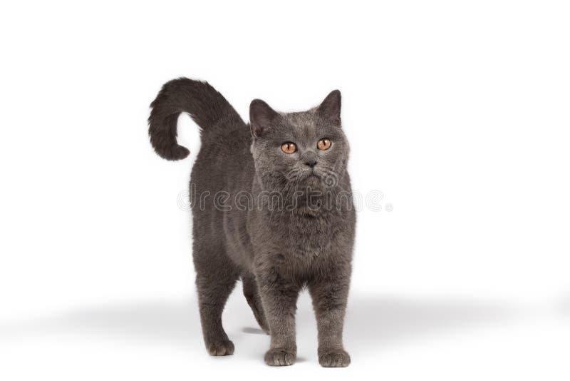 查寻的猫 图库摄影