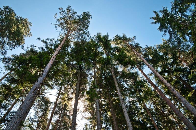 查寻结构树 免版税图库摄影