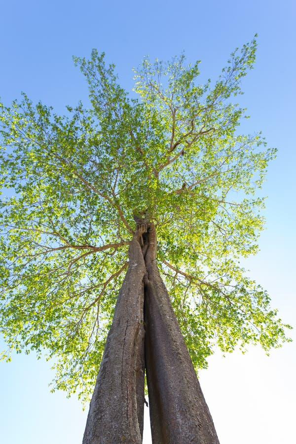 查寻结构树 免版税库存照片