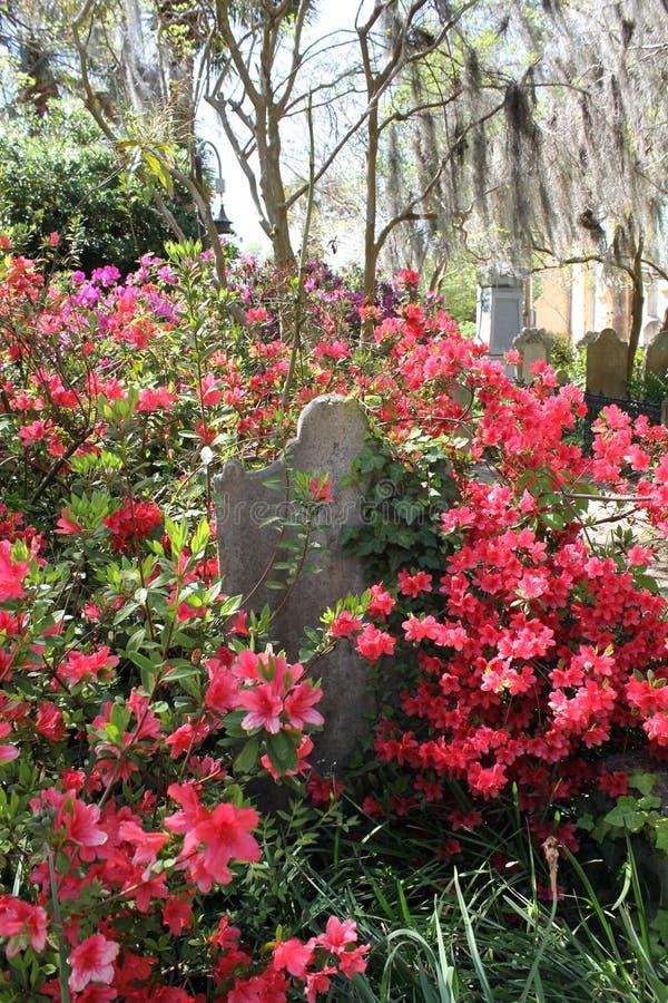查尔斯顿公墓 免版税库存照片