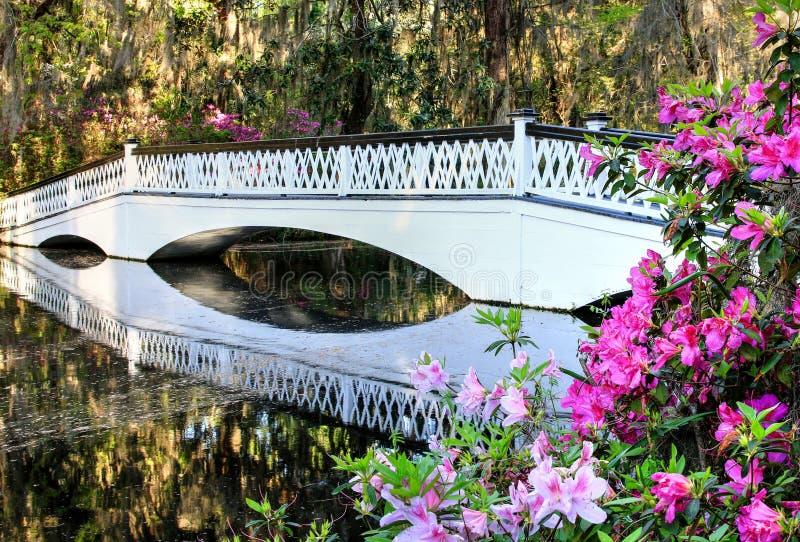 查尔斯顿木兰种植园白色格子桥梁和杜娟花 免版税库存照片