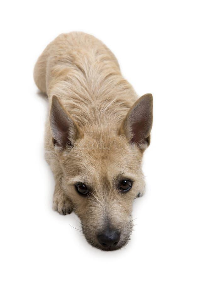 查找您的狗 免版税库存图片