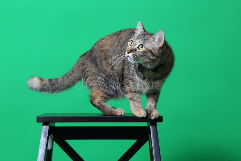 查看照相机的虎斑猫 库存照片