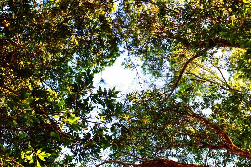 查寻在树和天空 库存图片