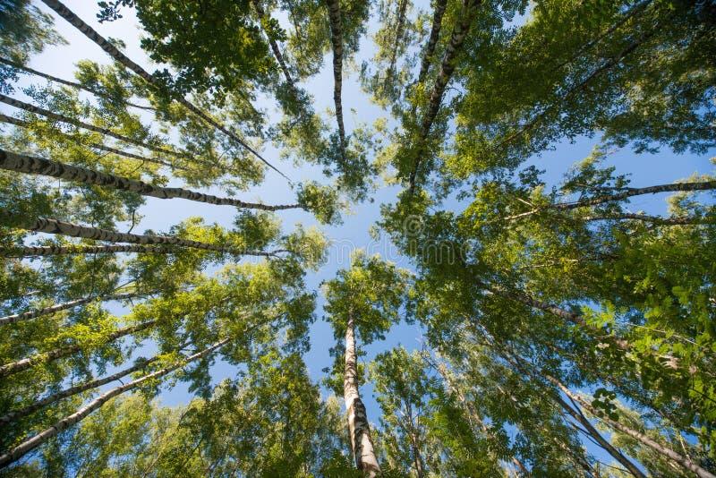 查寻在森林-绿色树枝自然摘要背景里 库存图片