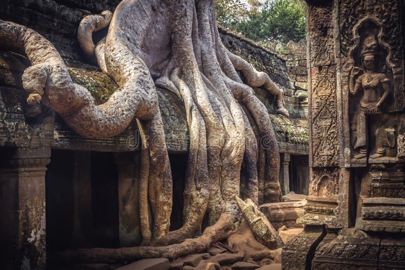 柬埔寨旅行象印度榕树根源ruine吴哥窟寺庙从萝拉・卡芙特的Ta Prohm 免版税图库摄影