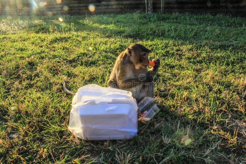 柬埔寨暹粒市吴哥窟猴子劫掠的早餐 库存照片