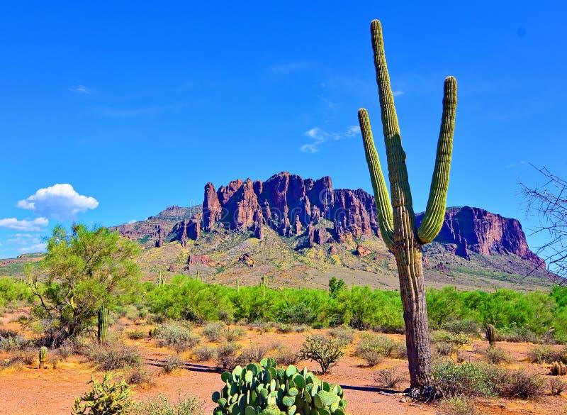 柱仙人掌仙人掌迷信山脉天空蔚蓝亚利桑那 免版税库存图片