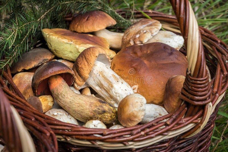 柳条筐细节用可食的蘑菇 免版税库存照片