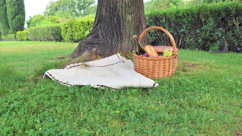 柳条野餐篮子用白色和黑葡萄和酒在绿草外部在夏天公园,没有人 库存照片