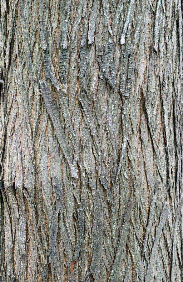 柳树吠声 库存图片