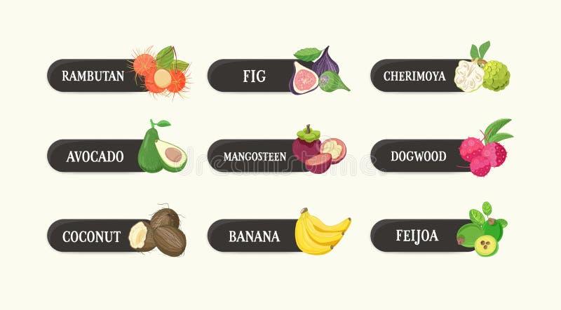 标签的汇集用可口成熟新鲜的水多的异乎寻常的热带水果和他们的名字 捆绑与鲜美的标记 向量例证