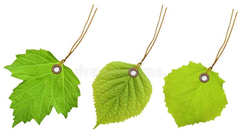 标记标签绿色叶子 免版税库存图片