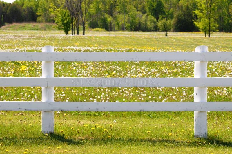 栏杆白色 库存图片