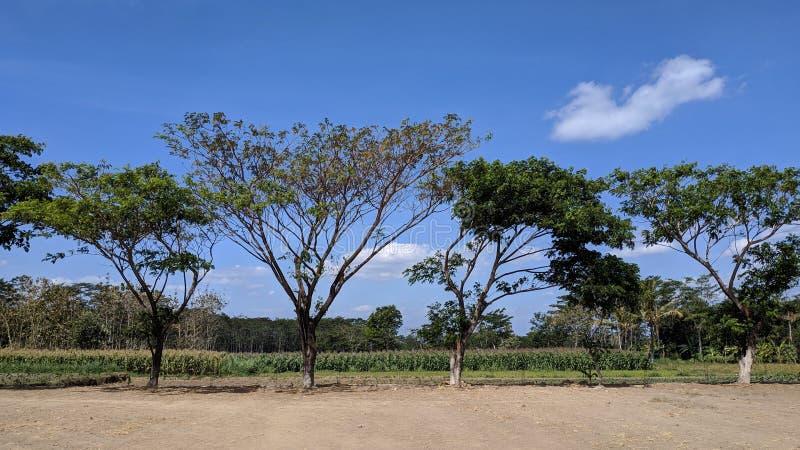 树、天空蔚蓝和棕色领域风景  免版税库存照片