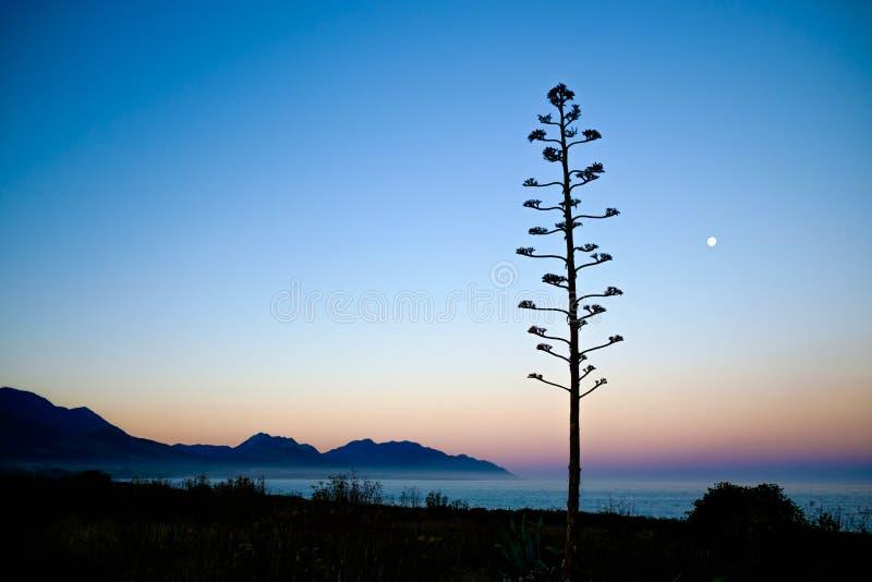 树、月亮和充满活力的天空平静的背景  库存照片