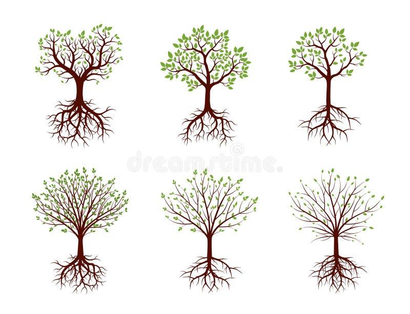 树,根和叶子形状也corel凹道例证绿色.客房,a叶子.求向量设计图图片