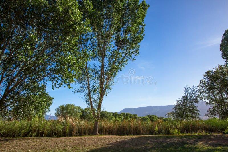 树、沼泽和山长远看法在过时的问题大农场国家公园在三角叶杨,亚利桑那附近 免版税库存照片