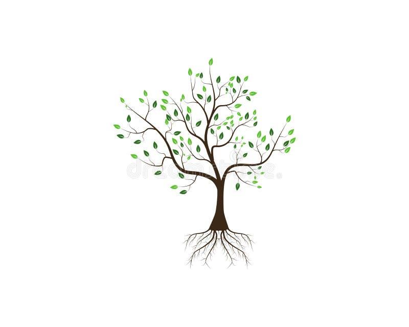 树一个风格化传染媒介例证的象概念 向量例证