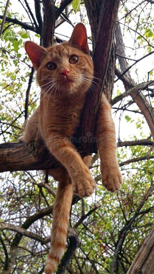树上升 免版税库存图片