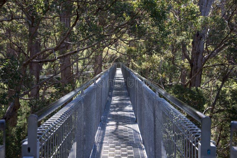树上面在巨人的谷的步行桥梁 库存照片