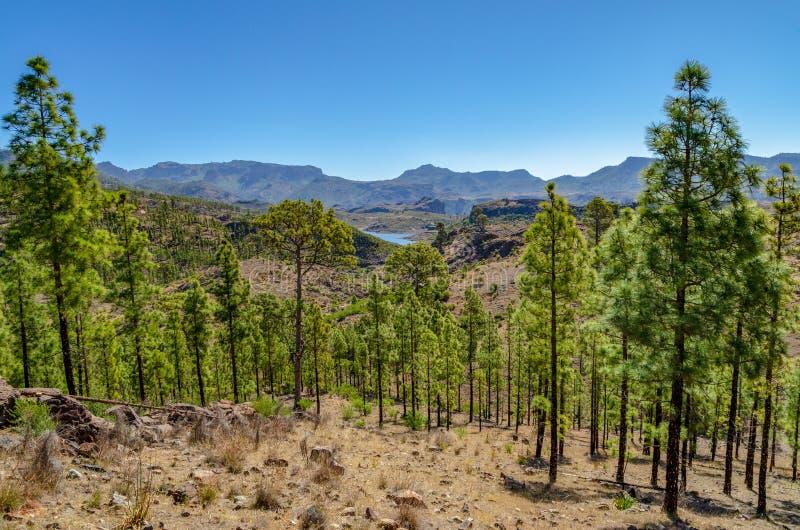 树下坡与山脉匹配 图库摄影