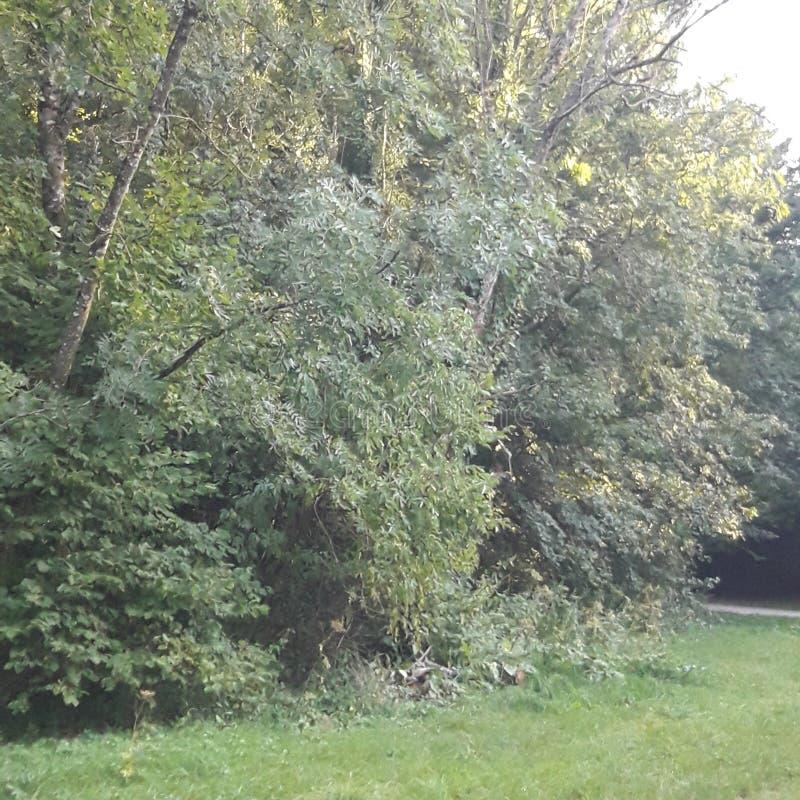 树与太阳森林天 库存照片