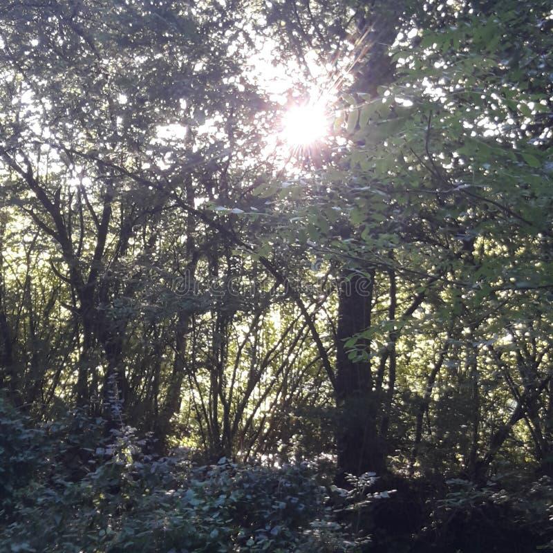 树与太阳森林天 免版税库存照片