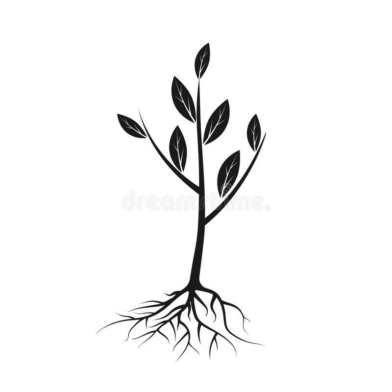 树与根和叶子的象黑色 皇族释放例证