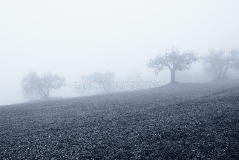 Download 树丛橄榄冬天 库存图片. 图片 包括有 种田, 自然, 地中海, 农田, 农场, 绿色, 环境, 冷静, 年龄 - 22350645