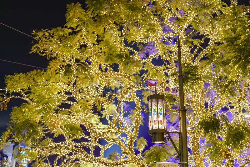 树丛的美好的圣诞灯的夜视图 免版税库存照片
