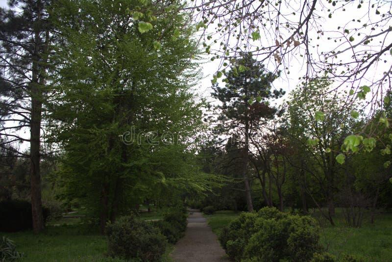 树丛绿色 免版税库存照片