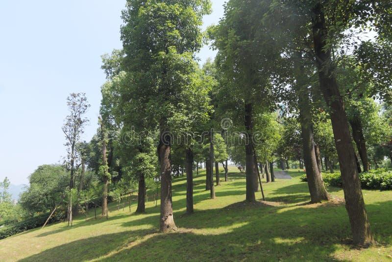 树丛 免版税库存照片