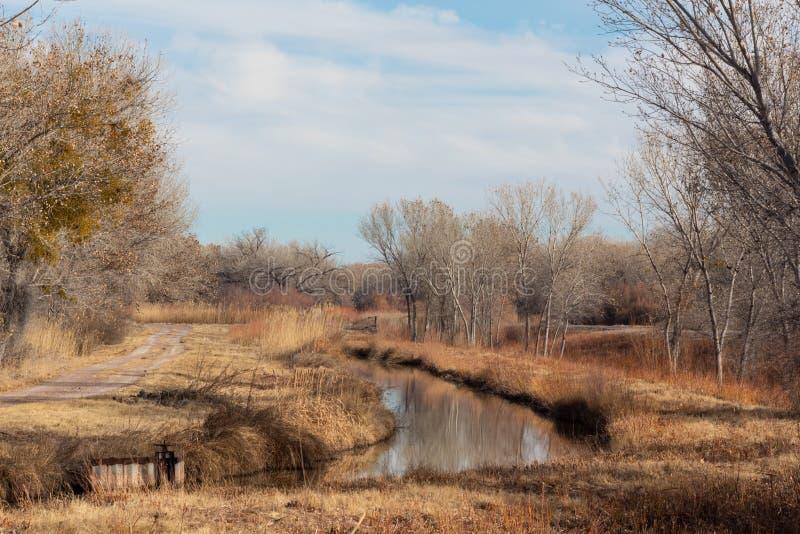 树丛del亚帕基新墨西哥,与路和灌渠,光秃的树的冬天风景 免版税库存图片