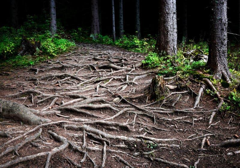 树交错的根  免版税库存图片